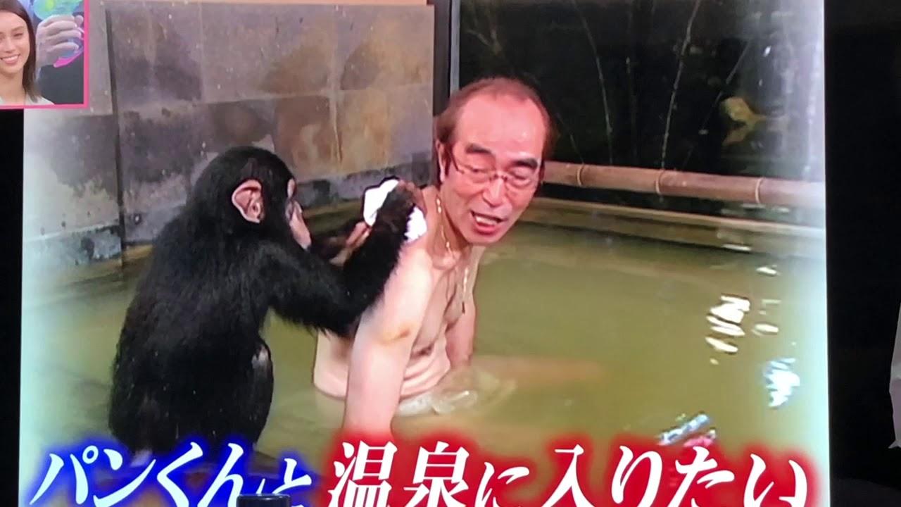 パン 志村 君 動物園