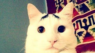 Cat compilation (2013 - 3rd) подборка котов (2013 - 3я часть)