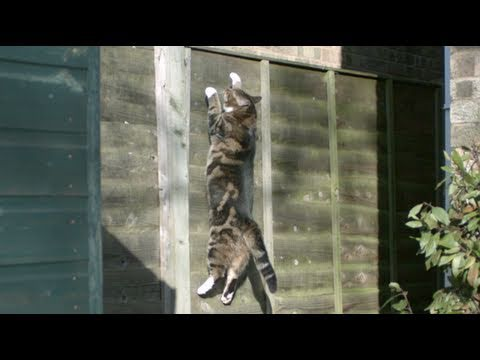 download Gravity Defying Cat - The Slow Mo Guys