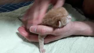 아기고양이 분유먹이기