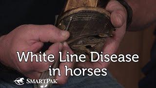 White Line Disease