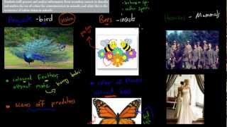 C.4.6. Colour vision and communication (HSC biology)