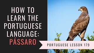 how to learn Portuguese (birds) pássaro