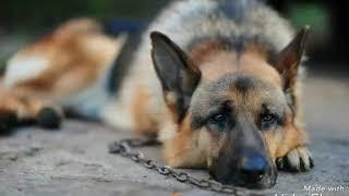 Sos!! Собаку повесили на цепи!! Живодер обещал отрезать голову собаке!!