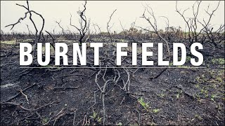 Photographing burnt fields & a beautiful forest, wild deer & going abstract! - Day 1