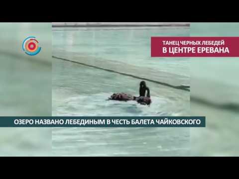 Любовный танец черных лебедей в центре Еревана