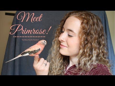 Meet my pet bird!