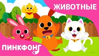 Животные-Малыши | Песни про Животных | Пинкфонг Песни для Детей