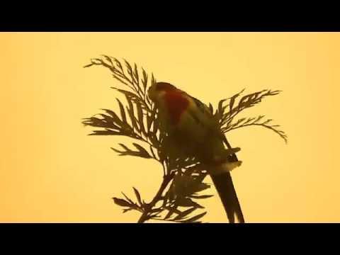 Разные виды попугаев