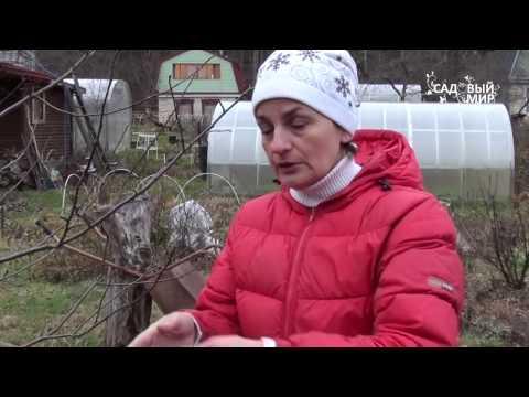 """Подготовка сада к зиме. Защита деревьев от зайцев. Сайт """"Садовый мир"""""""