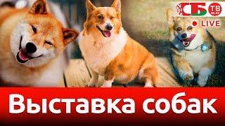 Шоу-выставка породистых собак | СТРИМ
