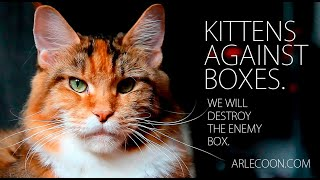 Kittens and box | Funny cats | Kittens and cats have fun | Cool cats!