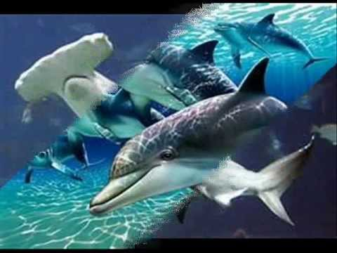 Endangered Animals: Marine Life - YouTube
