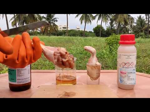 CHICKEN VS SULFURIC ACID VS HCL ACID | DAMAGE TO SKIN BY ACIDS | EXPERIMENTS AND HACKS