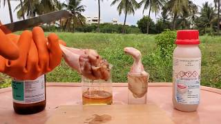 CHICKEN VS SULFURIC AĊID VS HCL ACID | DAMAGE TO SKIN BY ACIDS | EXPERIMENTS AND HACKS