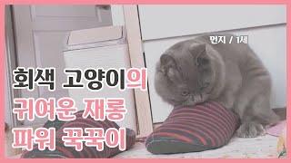 (심장주의) 귀여운 회색고양이의 꾹꾹이 / 먼지일상생활…