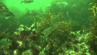 WettieTV - Fiordland Spearfishing Adventures May 2014 Part 1