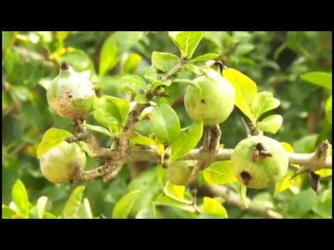 Identification of Medicinal Plants - Part 1 - tamil health videos