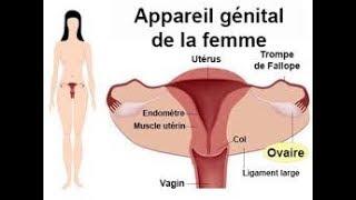 Liste des plantes pour Traiter les infections vaginales, kystes et fibromes.