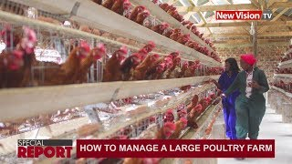 How to manage a large poultry farm