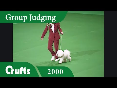 Toy Group Judging from Crufts 2000