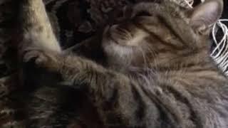 Не будите спящих котиков, ведь им тоже снятся сны