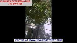 Termite Bed Bug Bee and Mice Control Long Branch Manasquan Matawan NJ 732-640-5488 New Jersey