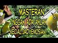 Masteran Kecial Kuning  Mp3 - Mp4 Download