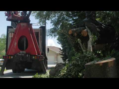 Tree Removal in Palm Harbor Florida