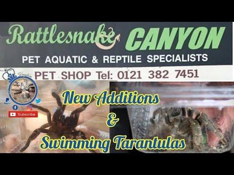 Rattlesnake Canyon & Swimming Tarantulas