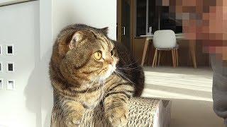 낯선 사람이 집에 찾아와서 깜짝 놀란 고양이들