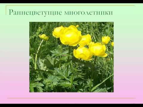 Цветник Сайт о растениях