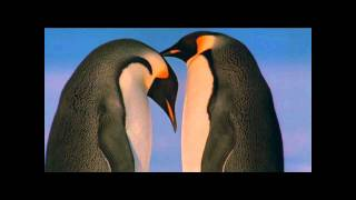 March of the Penguins- Love Game