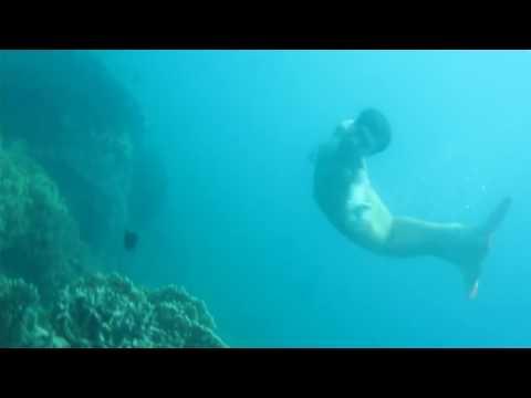 Người Cá Lặn Xuống Đại Dương Thăm Bạn Bè - Tiun