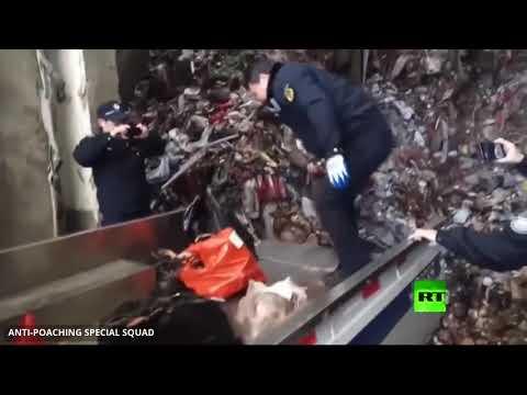خوفا من فيروس -كورونا-.. الصين تحظر تجارة الحيوانات البرية  - نشر قبل 2 ساعة