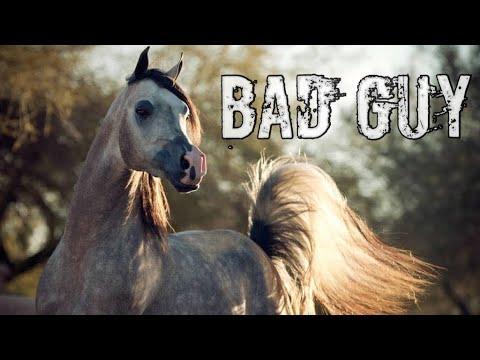 Bad Guy || Arabian Horse Music Video ||