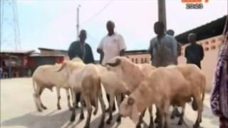 Tabaski   ouverture de la foire à bétail