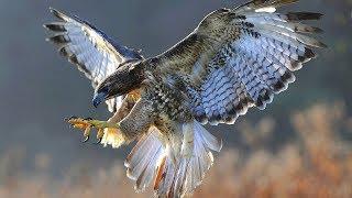 """Читаем книгу """"Мир животных"""" - Хищные птицы"""