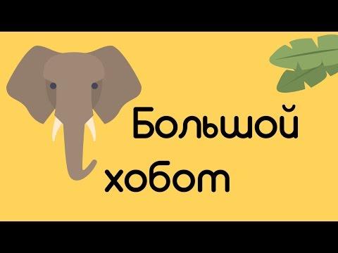 Почему у слона длинный нос?
