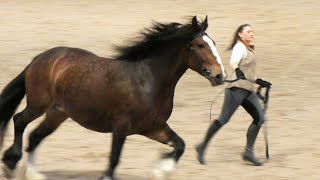 ЛОШАДИ тяжеловозы. Породный ринг АТЛАНТЫ конного мира #ИППОсфера 2019