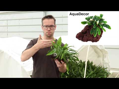 Get the right start with Tropica Plants!