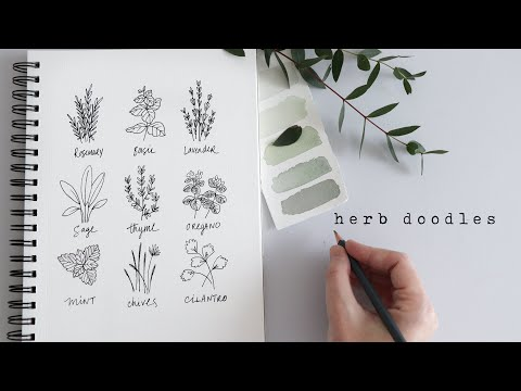 How To Draw Herbs | Fun Beginner Doodles