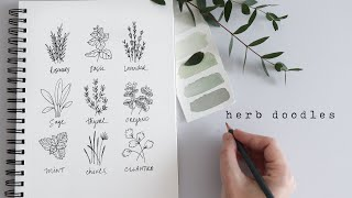 How To Draw Herbs | Fun Beginner Doodles