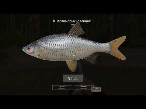 Русская рыбалка 4 - река Вьюнок - Покрупнела ли рыба? Часть 2.