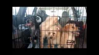 Hoarding Case August 2015 Underdog Rescue Of Fl