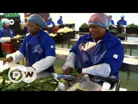Refrigerated transport goes green | DW English