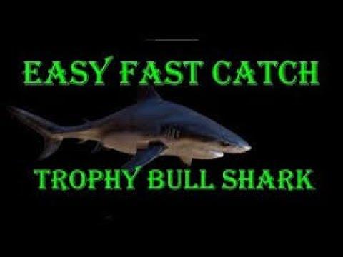 Fishing Planet / Amazonian Maze Bull Shark Trophy Hot Spot |
