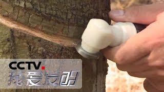 《我爱发明》 20190626 智慧农田2| CCTV科教