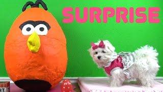 Opening A Giant Play-doh Orange Bird Surprise Egg - Gigante Huevo Sorpresa!