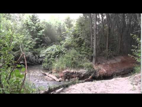 дождь в лесу слушать медитация